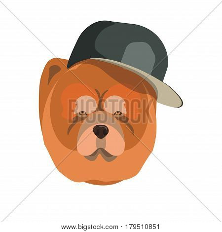 Chow Chow dog with dark cap breed close up portrait. Vector colorful illustration in flat design of domestic guardian animal with reddish long hair, small eyes and big face isolated on white