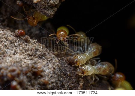Super macro image of horde of termites building their nest