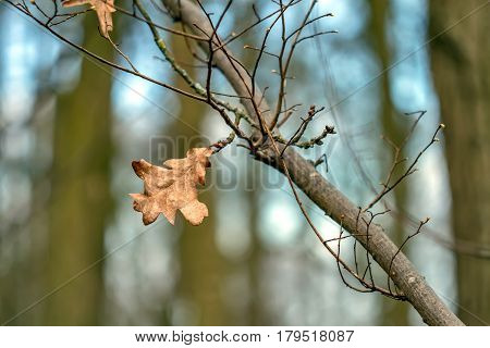 Last Year's Withered Leaves