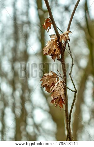 Leaves On The Tree In Spring