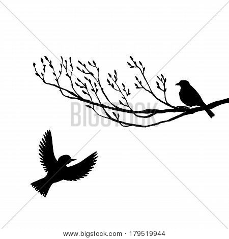 vector silhouettes of birds at tree, hand drawn songbirds at branch, isolated vector element