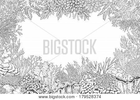 Hand drawn underwater natural elements. Sketch of reef corals background. Monochrome rectangle frame with space for text. Black and white illustration coloring page.