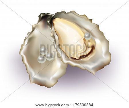 Beautiful Oyster with pearls on white background