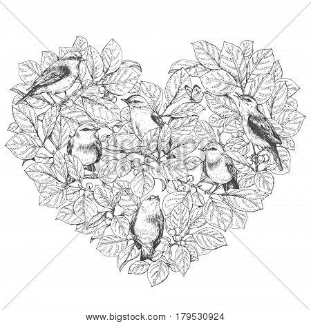 Hand drawn doodle birds sitting on branches. Monochrome bevy of songbirds leaves and berries. Heart shape. Black and white image for coloring. Vector sketch.