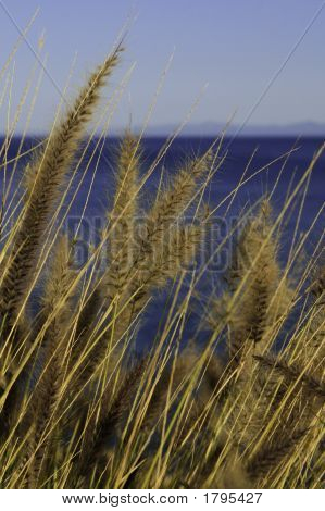 Cattails Blowing In The Wind Ii