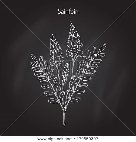 Common sainfoin Onobrychis viciifolia or Onobrychis sativa . Hand drawn botanical vector illustration poster