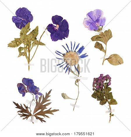 Set of herbarium wild dry pressed flowers and leaves isolated