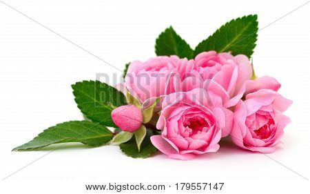 Five beautiful pink roses on a white background.