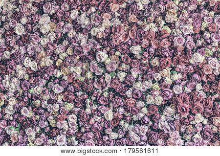 Desaturated rose wall background that is less vibrant but has greater detail