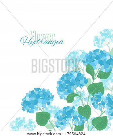 Vector illustration of hydrangea flower Background with blue flowers