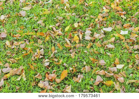 Autumn dry leaves on the green grass