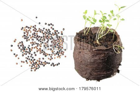 Seeds and seedling of thyme (Thymus serpyllum) isolated on white background