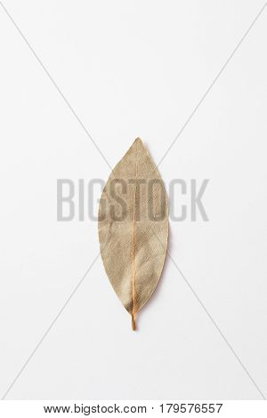 Dry laurel leaf on the white background