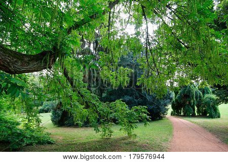 Under the branches of a large tree