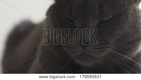 closeup of gray cat sitting and resting on window shelf, 4k photo