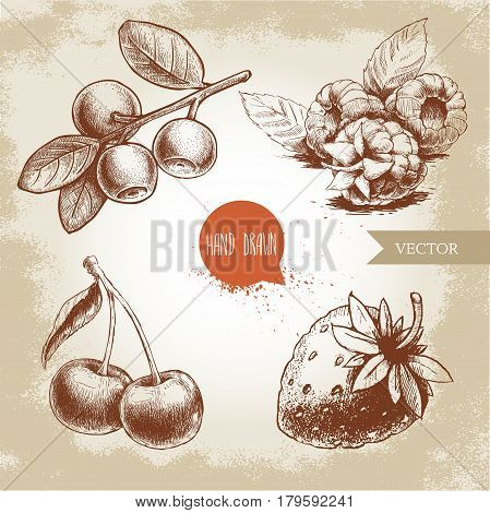 Hand drawn sketch style berries set. Raspberry with leafs strawberries cherry and blueberries branch. Healthy fruit and berry vector vintage illustration on old background.