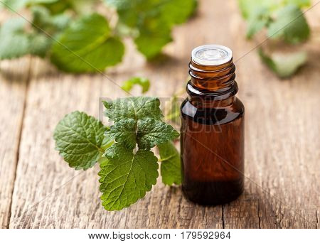 Mint essential oil in a glass bottle sprigs of fresh mint on an old wooden background