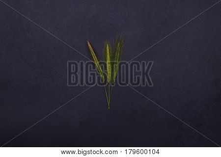 beautiful spring spikelet green grass floral seasonal blossom design on grey background copy space