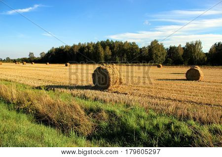Field with haystacks after the harvest in the village.