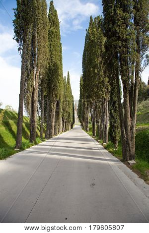 Lined with cypress trees leading to the Church