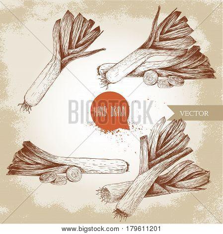 Hand drawn sketch style fresh leeks set. Fresh leek and slices of leek.Vintage illustration of healthy fresh organic food.