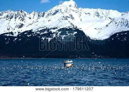 Flock Of Gulls In Front Of Mountain In Alaska