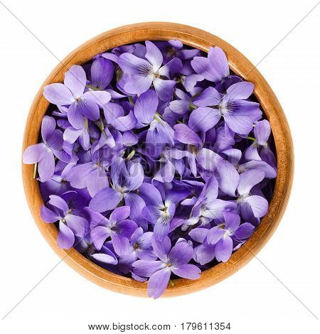 Wild violet flowers in wooden bowl. Also wood, sweet, English, common or garden violet. Viola odorata. Edible blossoms, used as salad decoration or for candying. Macro food photo close up over white.