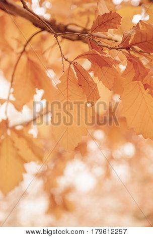 Leaves on a sunny morning, Fall season