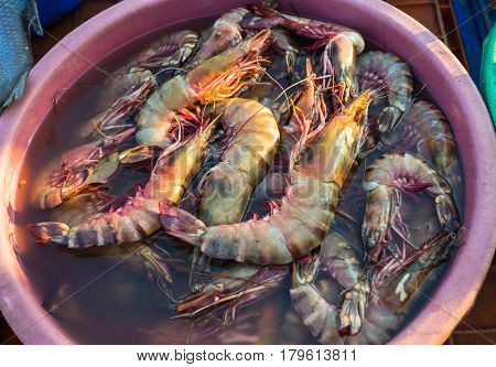 Sale Of Shrimp In The Markets Of India