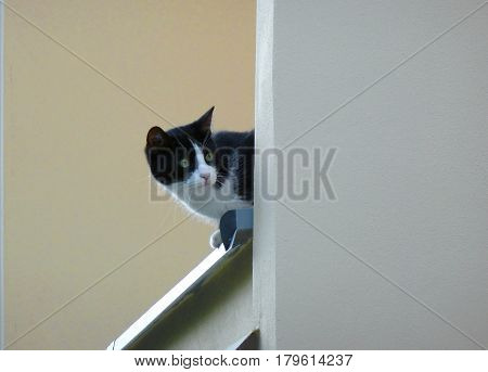 Photo of a black and white cat on a ledge