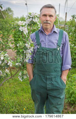 Elderly happy gardener and the flowering apple trees