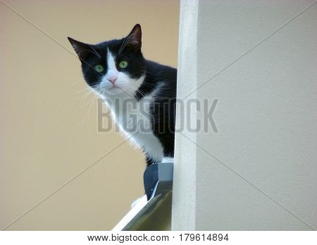 Photo of a cat standing on a ledge