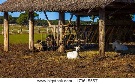 Farm with animals in Croatia, Southeast Europe