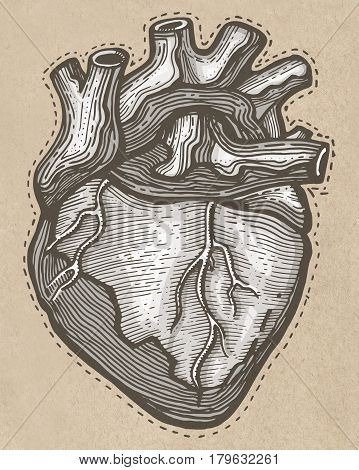 Hand Drawn Human Heart Illustration