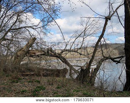 Trees on a coast of the Potomac River near Washington USA March 19 2017