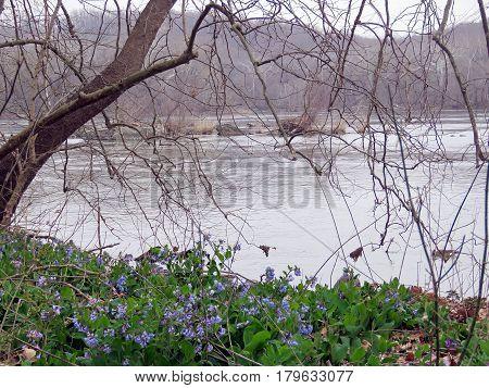 The landscape of Potomac River near Washington USA March 26 2017