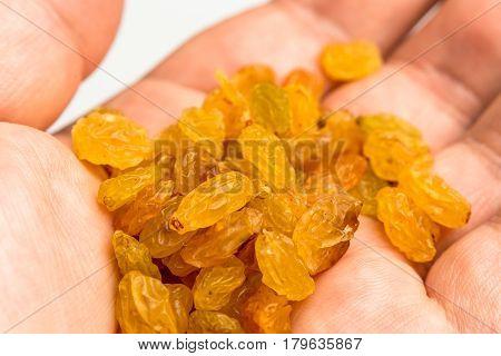 Dried golden raisins on male hand macro photo, healthy food concept