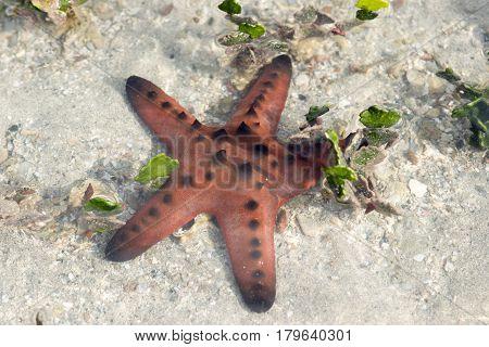 Sea star beautiful marine life in the sea