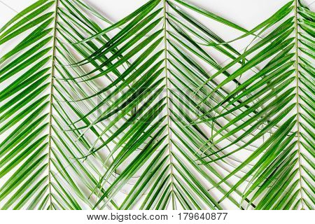 Trendy design with green herbs pattern of anthurium and palm on white desk background top view