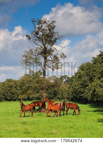 Team Of Horses In A Meadow