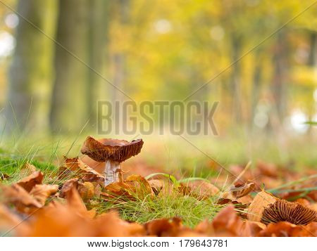 Mushroom Growing In An Autumn Tree Lane