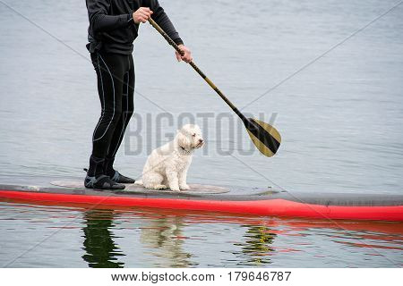 man in wetsuit on red paddleboard with white dog