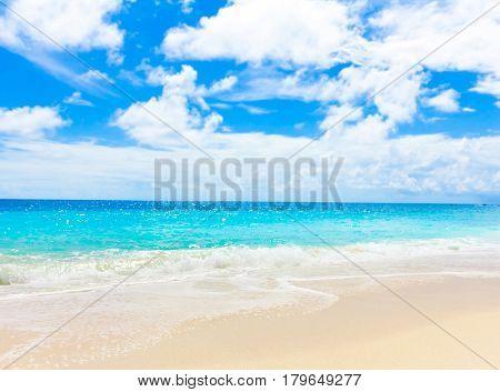 Shore Palms Landscape