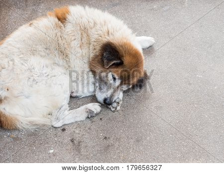 Sick dog is sleeping near the urban street in the city.