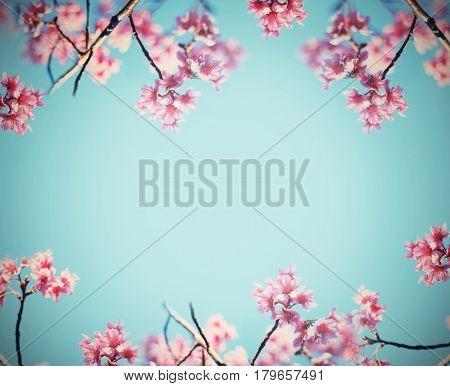 Pink cherry blossoms flower in full bloom over blue sky vintage filter effect. Spring background