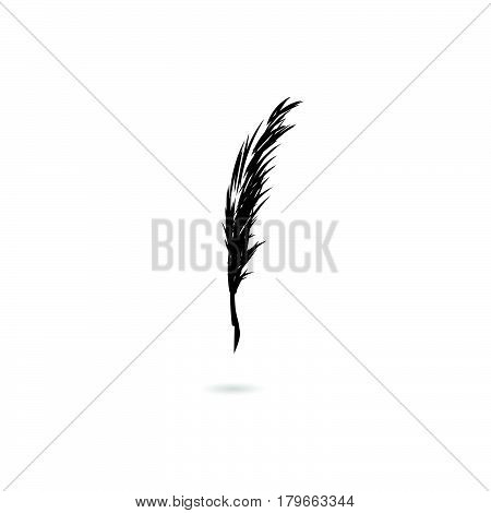 quill pen , wet and ruffled black feather isolated on white