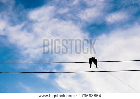 silhouette of the bird in love on power line or wire in blue sky cloud background.