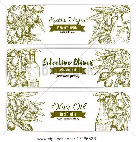 Olive oil and fresh olive fruit banner set. Branches of olive tree with fresh fruit and bottles of extra virgin oil sketches. Premium quality vegetarian food menu, food packaging label design