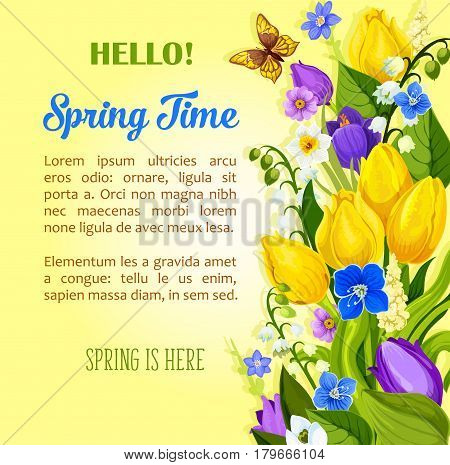 Hello Spring vector greetings and wishes for springtime season holiday. Flowers bouquet of tulips, crocuses and blooming lily of valley blossoms on field. Spring time quote poster or card template