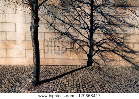 Bare tree in urban surrounding casting long shadow on brick wall in the background